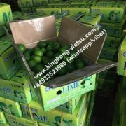 lime/seedless lime/vietnam lime/fresh seedless lime/export lime/lime export/lime of vietnam/fresh lime/ vietnam lime/vietnam fresh lime/vietnam seedless lime