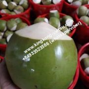 fresh coconut -green coconut-coconut vietnam-vietnam coconut-fresh coconut vietnam- green coconut vietnam- diamond coconut- young coconut- fresh coconut-young coconut vietnam