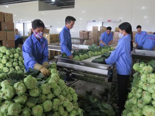 Vietnam shows great potential for processed vegetable, fruit